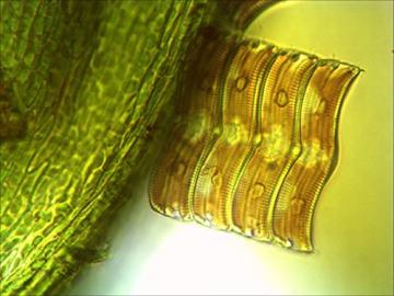 Bresser Mikroskop Science TRM-301