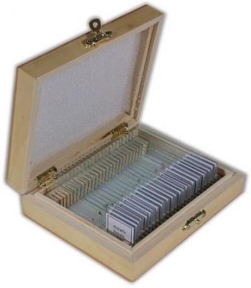 50 Stück Dauerpräparate, Anatomie und Zoologie für Mikroskope – in zwei Holzboxen