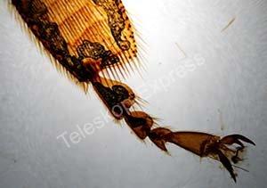 TS-Optics Dauerpräparate (Tiere)  für Mikroskope – 25 Stück in Holzbox
